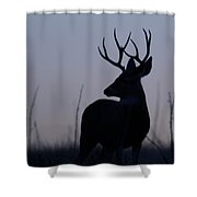 Mule Deer Buck At Sunset Shower Curtain