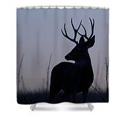 Mule Deer Buck At Sunset Shower Curtain