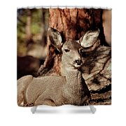 Mule Deer Doe Shower Curtain