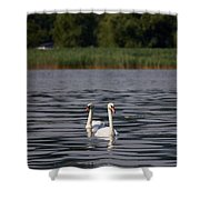 Mute Swans. Lago Di Iseo Shower Curtain