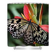Nature's Treasures  Shower Curtain
