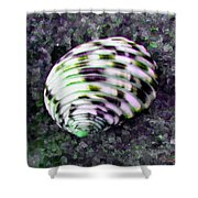 Nerita Versicolor Four-tooth Nerite Shell Shower Curtain