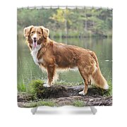 Nova Scotia Duck Tolling Retriever Shower Curtain
