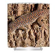 Ocellated Lizard Timon Lepidus Shower Curtain