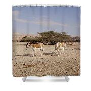 Onager Equus Hemionus Shower Curtain
