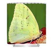 Orange Barred Sulfur Butterfly Shower Curtain