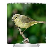 Orange-crowned Warbler Shower Curtain