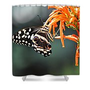 Orchard Swallowtail Shower Curtain