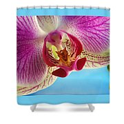 Pink Orchid Flower Details Shower Curtain