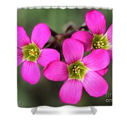 Oxalis Magnifica Shower Curtain