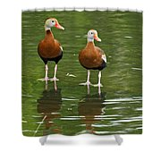 Pair Black-bellied Whistling-ducks Shower Curtain
