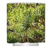 Pandanus Palm Tree Shower Curtain