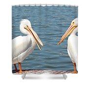 Pelican Pals Shower Curtain