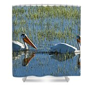 Pelicans In Hayden Valley Shower Curtain