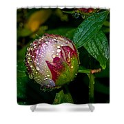 Peony With Rain Drops Shower Curtain