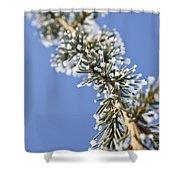 Pine Tree Branch Shower Curtain