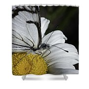 Pine White Butterfly Shower Curtain