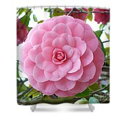 Pink Camellia Square Shower Curtain
