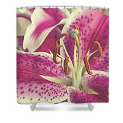 Pink Daylily Shower Curtain