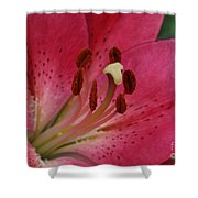 Pink Lilly Shower Curtain