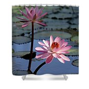 Pink Water Lily In The Spotlight Shower Curtain