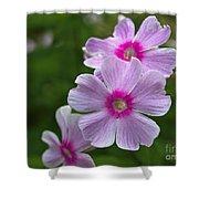 Pink Wood-sorrel  Shower Curtain