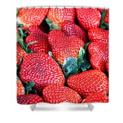 Plant City Strawberries Shower Curtain