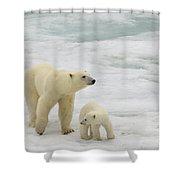 Polar Bear With Cub Shower Curtain