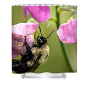 Pollination Nation V Shower Curtain