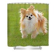 Pomeranian Dog Shower Curtain