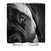 Portrait Of A Mastiff Shower Curtain