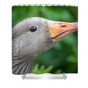 Portrait Of Greylag Goose, Iceland Shower Curtain