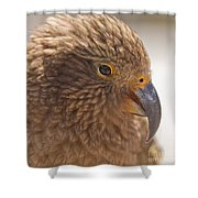 Portrait Of Nz Alpine Parrot Kea Nestor Notabilis Shower Curtain