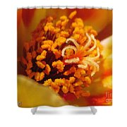 Portulaca In Orange Fading To Yellow Shower Curtain