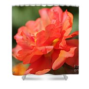 Portulaca Named Sundial Tangerine Shower Curtain