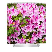 Pretty In Pink - Spring Flowers In Bloom. Shower Curtain