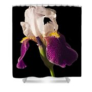 Purple And White Bearded Iris Shower Curtain
