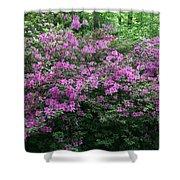Purple Azaleas Shower Curtain