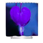 Purple Bleeding Heart Flower Shower Curtain