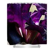 Purple Iris Shower Curtain