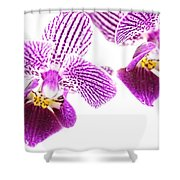 Purple Orchid-5 Shower Curtain