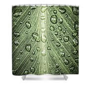 Raindrops On Green Leaf Shower Curtain
