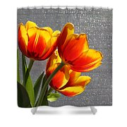 Red And Yellow Tulip's In A Window Shower Curtain by Robert D  Brozek