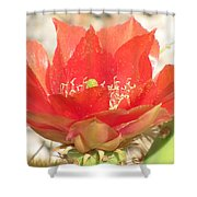 Red Cactus Flower Shower Curtain