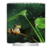Red-eyed Tree Frog In The Rain Shower Curtain