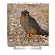 Red Footed Falcon Falco Vespertinus Shower Curtain