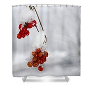 Red Fruit With Snow Shower Curtain