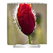 Red Poppy Bud Shower Curtain