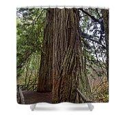 Redwood Shower Curtain