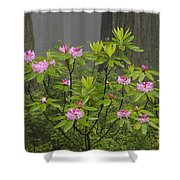Rhododendron In Del Norte State Park, Ca Shower Curtain